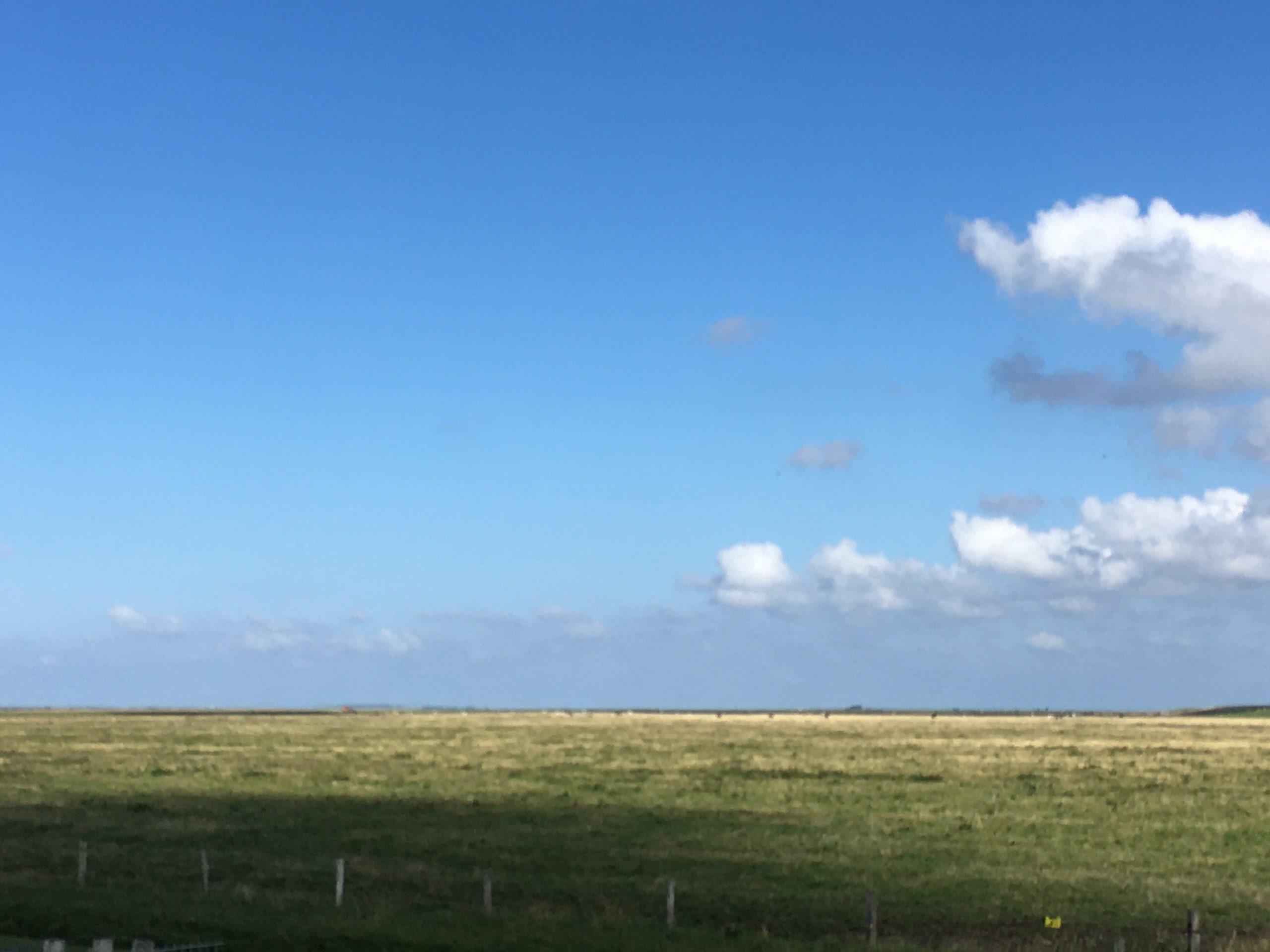 Salzwiesen im Deichvorland